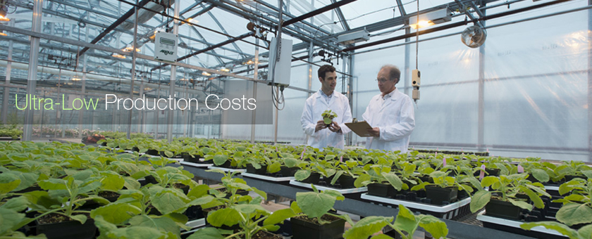 Plant Form: Ultra-low Production Costs